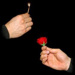 Match to rose - l' Allumette  devient Rose